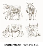 dairy cattle sketch set. cow... | Shutterstock .eps vector #404541511