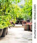 lemon tree shop in thailand | Shutterstock . vector #404613385