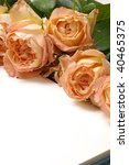 beautiful rose with copy space | Shutterstock . vector #40465375