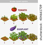 Stage Of Growth Vegetables 6 1...