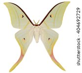 Small photo of Beautiful Indian Moon Moth (Actias selene, male) isolated on white background