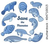 Manatees Swimming In The Ocean...