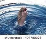 dolphin | Shutterstock . vector #404780029