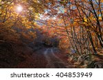 autumn landscape walk in the... | Shutterstock . vector #404853949