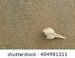 shell on the sand beach | Shutterstock . vector #404981311