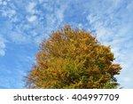 sky tree | Shutterstock . vector #404997709