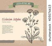 cichorium intybus aka common...   Shutterstock .eps vector #405076615