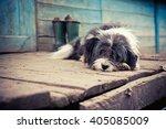 Homeless Sad Dog Lying On A...