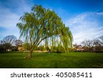 Weeping Willow Tree At Baker...