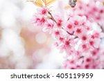 wild himalayan cherry flowers | Shutterstock . vector #405119959