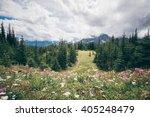 flowers in kananaskis country ... | Shutterstock . vector #405248479