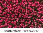 Pink Tulip Field In North...