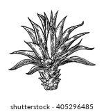 cactus agave. vintage black...   Shutterstock .eps vector #405296485