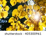Bright Sunburst Through Vibran...