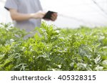 Farmer Using The Tablet In The...