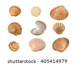 set of nine seashells isolated... | Shutterstock . vector #405414979