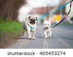 Stock photo city dogs 405453274