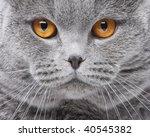 cat portrait | Shutterstock . vector #40545382