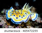 Nudibranch From Red Sea