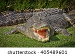 a huge saltwater crocodile... | Shutterstock . vector #405489601