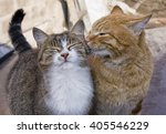 Stock photo love cats 405546229
