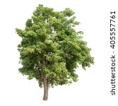 isolated tree on white... | Shutterstock . vector #405557761