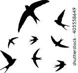 Stock vector swallow bird silhouette vector illustration 405558649