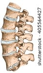 spine disc problems ... | Shutterstock . vector #405564427