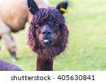 alpaca | Shutterstock . vector #405630841