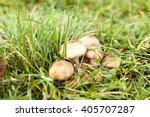 Inedible Mushrooms Growing I...