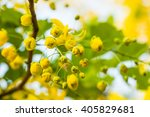 Golden Shower Flowers On Tree ...