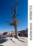 Pine Tree In The Desert Of...