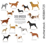 dog breeds. hunting dog set... | Shutterstock .eps vector #405884725