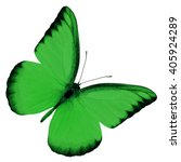 Beautiful Green Butterfly Uppe...