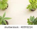 four green ornamental plants on ... | Shutterstock . vector #40593214