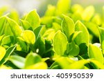 Green Nature With Copy Space...