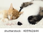 Stock photo little puppy and kitten asleep 405962644