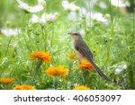 bird with the flower | Shutterstock . vector #406053097