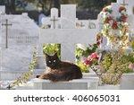 Cat On Graveyard