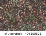 Forest Floor Texture  Vintage...