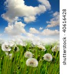 Dandelions against white clouds - stock photo