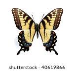Papilio Glaucus Maynardi ...
