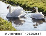 Beautiful White Swans In Water...