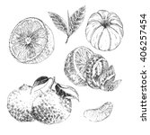 vector citrus fruit hand drawn... | Shutterstock .eps vector #406257454