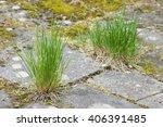 grass growing in the cracks... | Shutterstock . vector #406391485