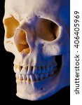 Small photo of Cranial Bone (Short lighting, blue cast)