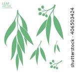 Eucalyptus Tree. Vector...