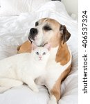 Stock photo white cat loving boxer mix dog relaxing on bed 406537324