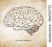 hand drawn line art... | Shutterstock .eps vector #406562731