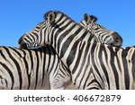 two zebras nuzzle against each... | Shutterstock . vector #406672879